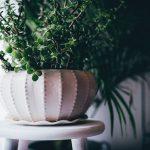 空間づくりやインテリアに欠かせないアイテム!観葉植物の役割と種類