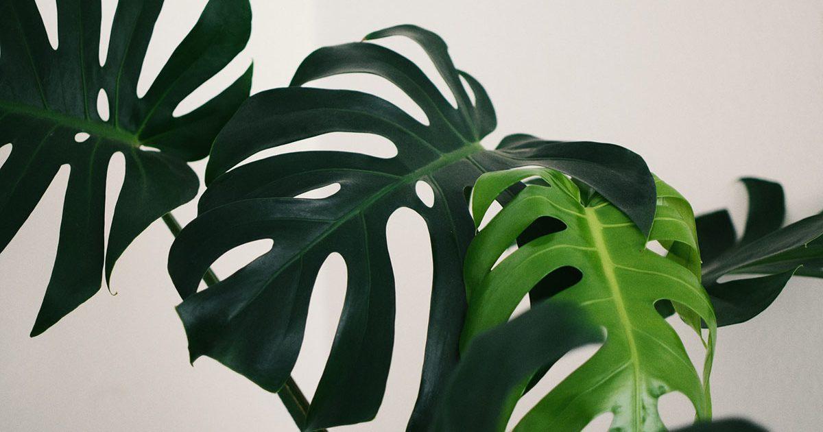 気持ちも装いも新たに! 新しい門出を演出する縁起のいい植物